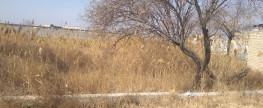 Завершение Уборки Территории Бухарского Еврейского Кладбища – 2018 Год